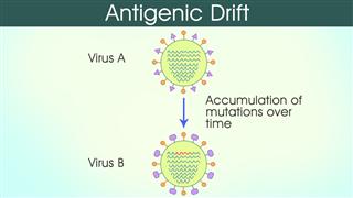 Antigenic Drift