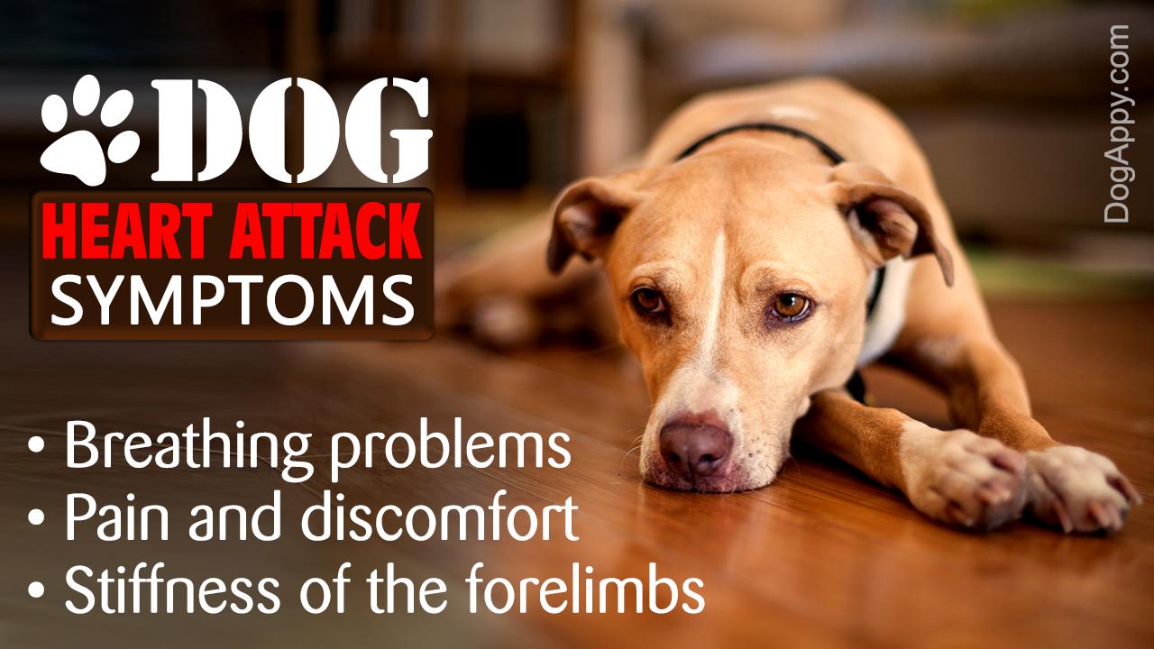 Dog Heart Attack Symptoms