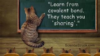 Cat Teacher Writes On A Blackboard