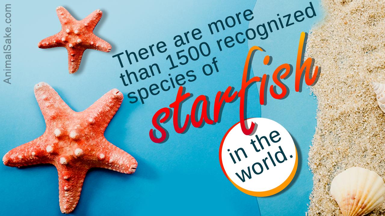 Starfish Habitat