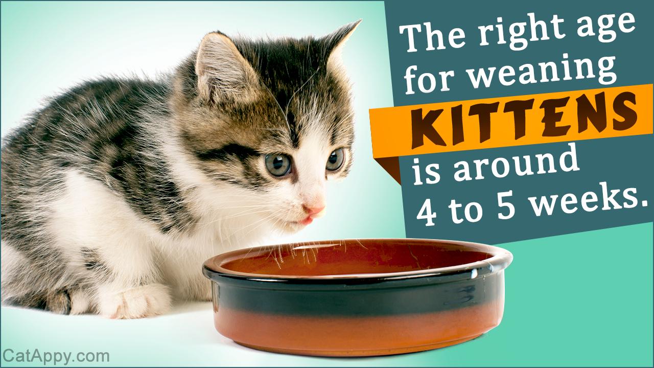 Weaning Kittens