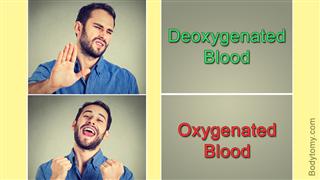 Dexoygenated Blood vs Oxygenated Blood