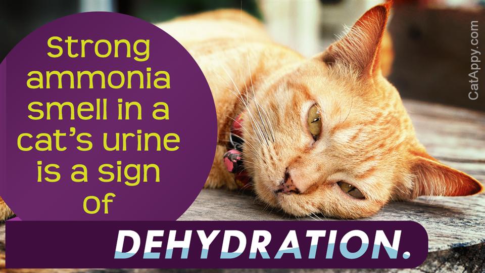 Dehydration in Cat
