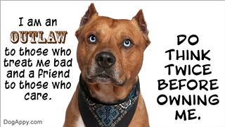 Pit bull dog meme