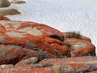 Rocks & Algae, St Helens, Tasmania
