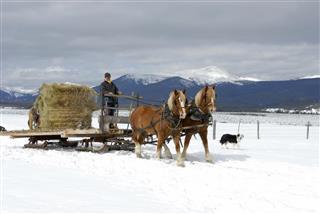 Man driving sleigh