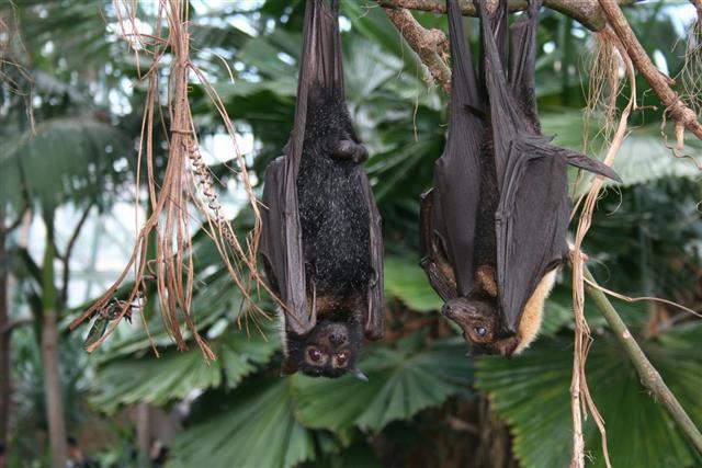 Bats in rainforest