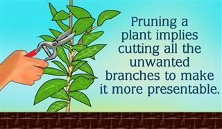 How To Prune A Gardenia Bush In 5 Simple Steps