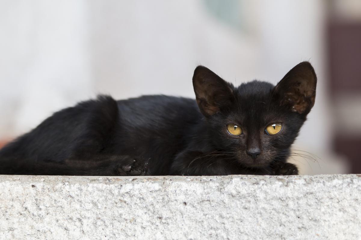 A Cat As Black As Blackest Coal