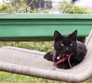 Black cat lying on wicker chair in garden