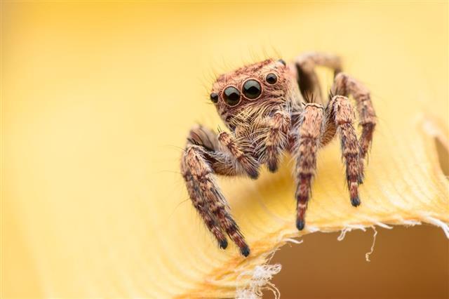 Super Macro Spider