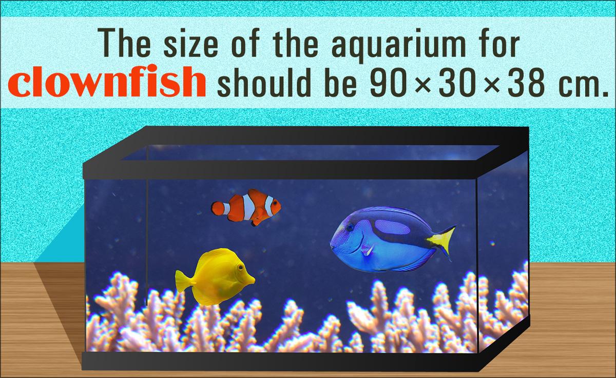 Clownfish Care
