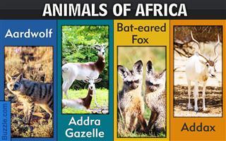 List of African animals