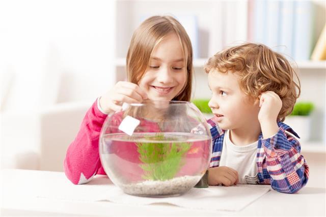 Happy children feeding their goldfish