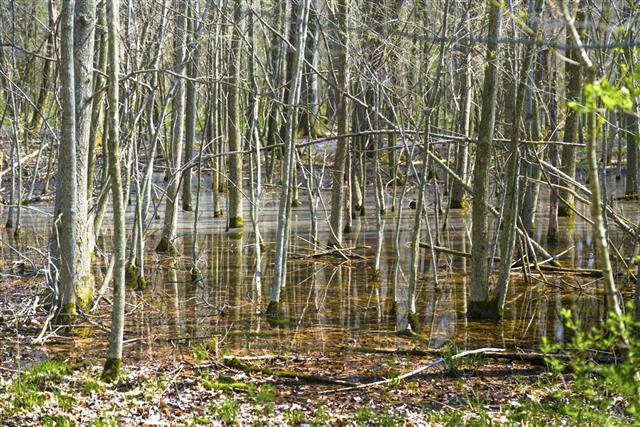 Wetland In Spring
