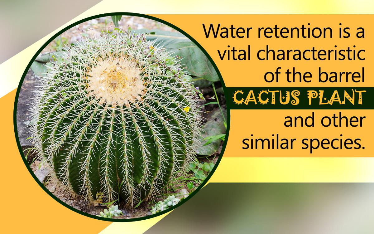 Barrel Cactus Adaptations