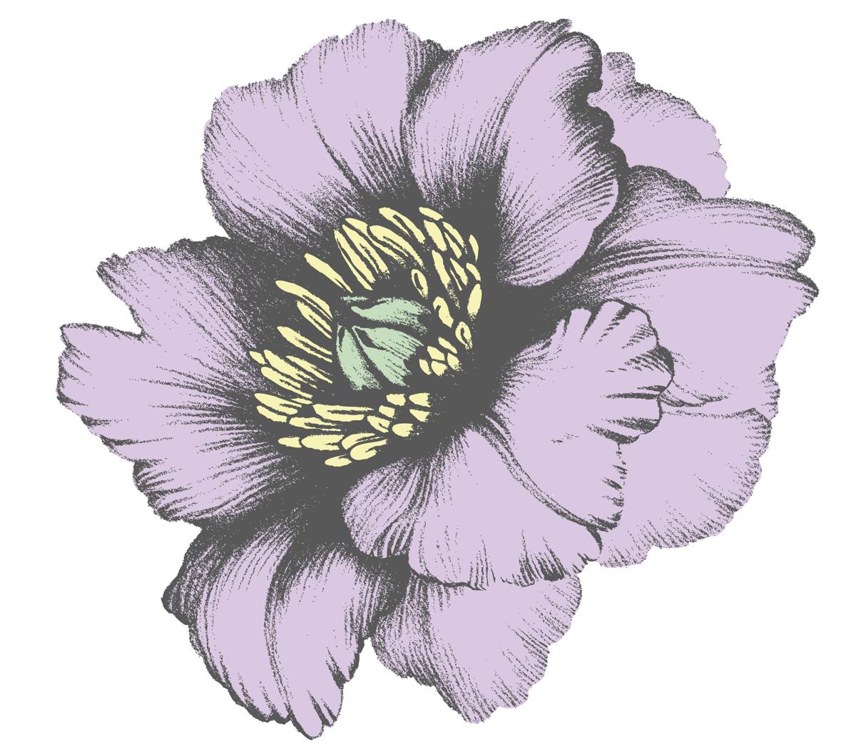 Single Lotus Flower Lotus Flower A Single Lotus Flower In A Small Garden At Lotus Flower