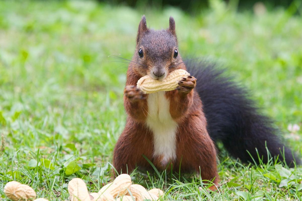 Squirrels Dog Food