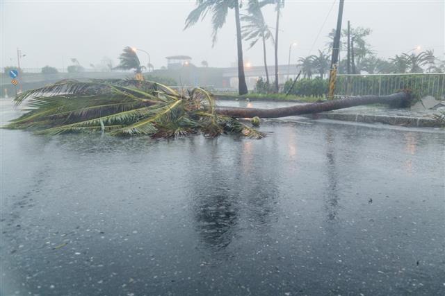 Tree on road during typhoon