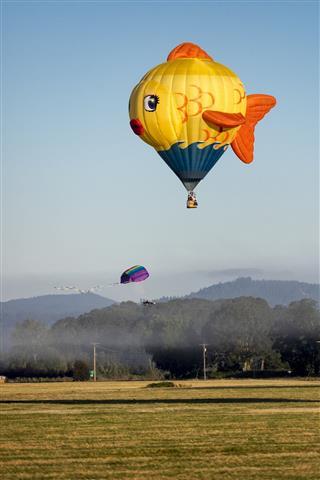 Hot Air Balloon Albany Oregon