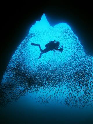 Cave Diver And Fish School