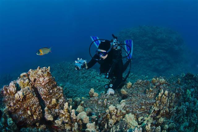 Scuba Diver Taking A Shot