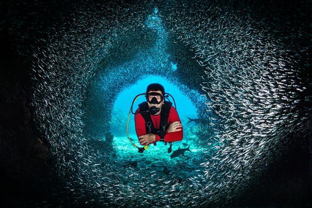Fish Tunnel