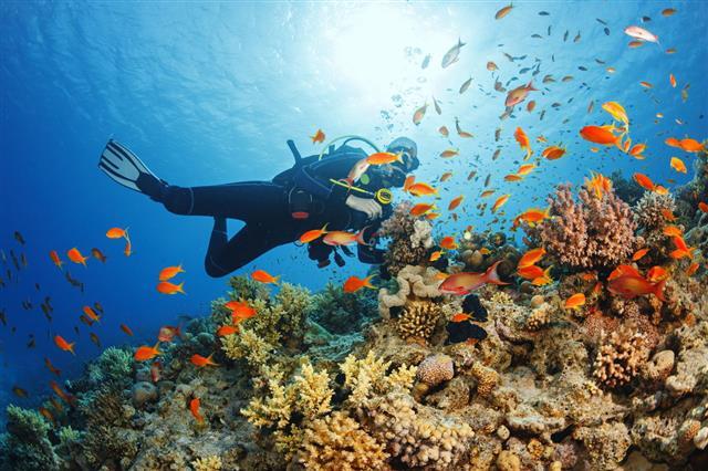 Underwater Scuba Diver