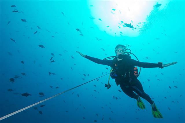 Reef Hook Palau Micronesia