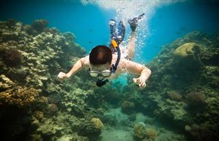 Snorkeler Red Sea