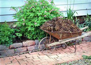 Mulching The Flowerbed