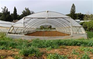 Wild Flower Greenhouse