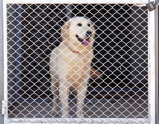 Sad Dog In A Kennel