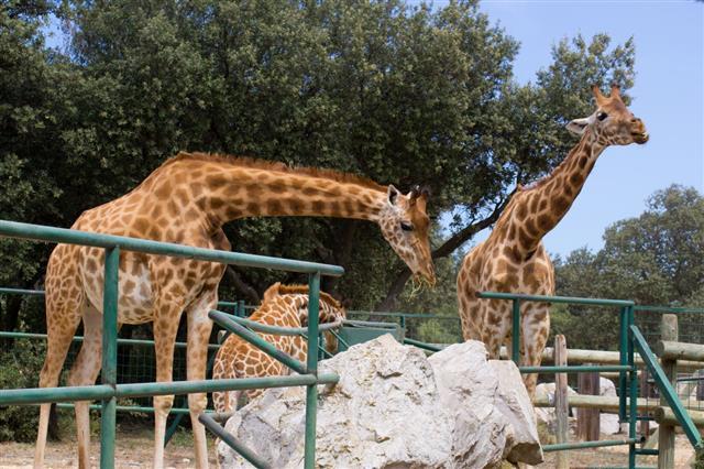 Animal In Zoo France
