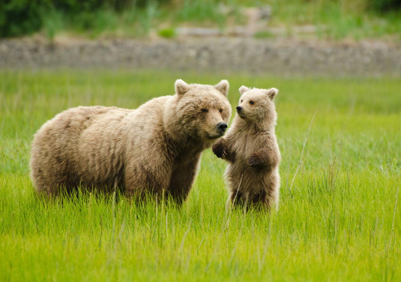Baby Animal Names Sake