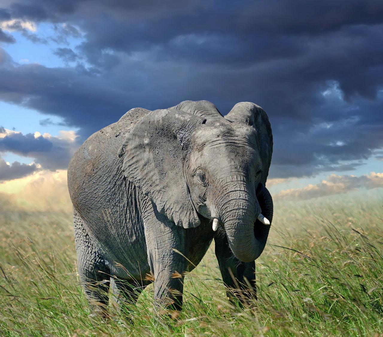 Herbivore Animals List