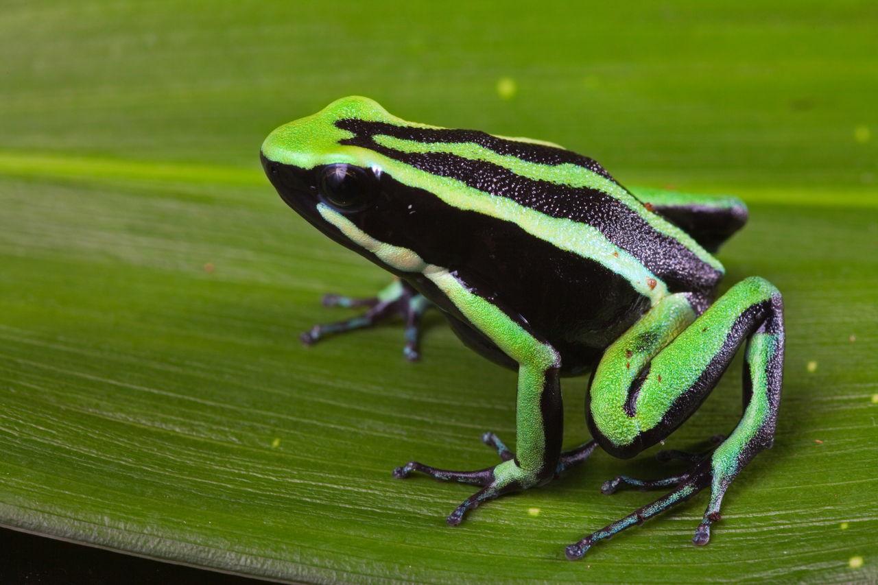 tropical rainforest animals list