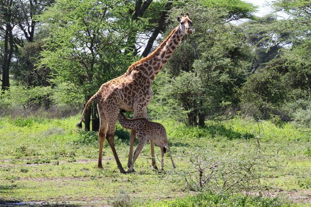 Serengeti A Wildlife Paradise