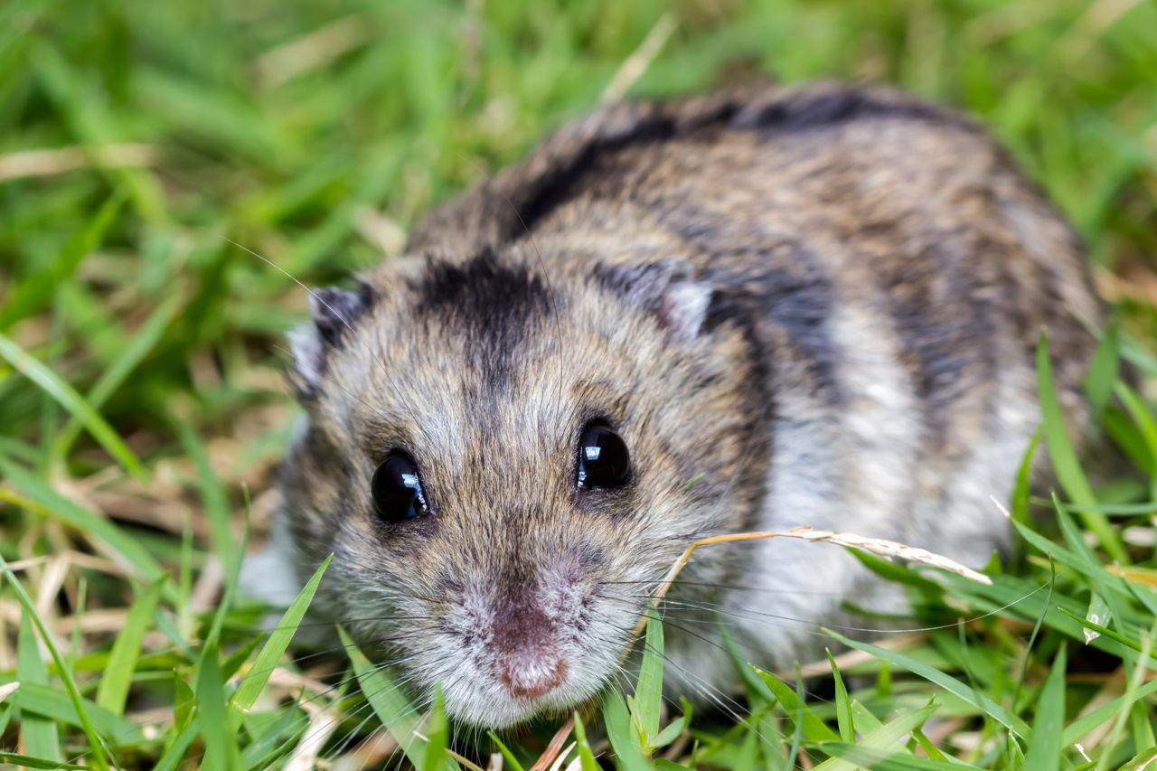 Dwarf Hamster Names