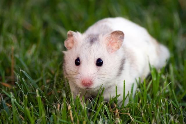Www Hamstercom
