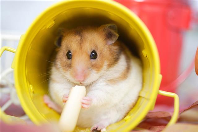 Hamster Snack Time
