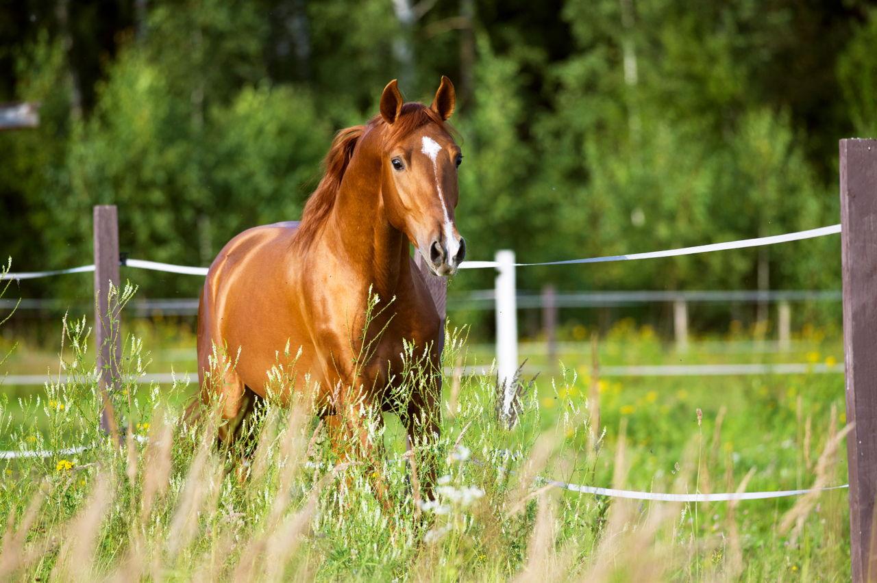 Mustang Horse Names