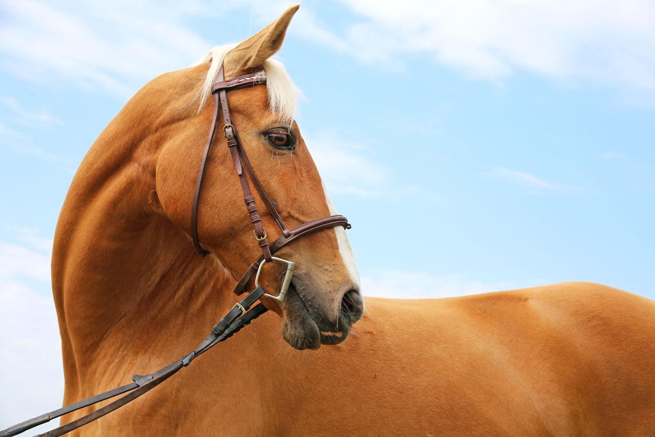 Mustang Horse Names - photo#22