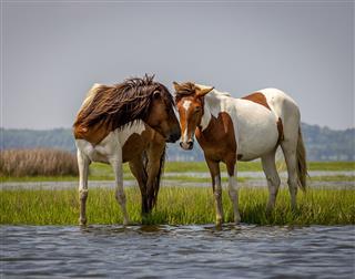 Playful Wild Horses
