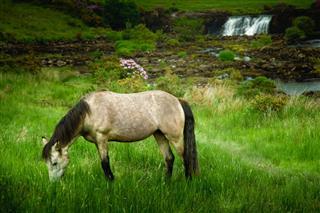 Gray Horse Irirsh Landscape