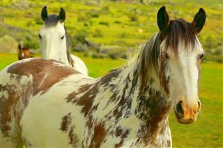 Wild Horses Estancia In Argentina
