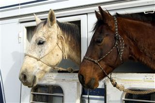 Rodeo Horses