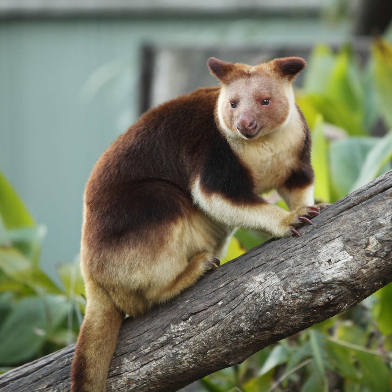 Tropical Rainforest Animals List - Animal Sake
