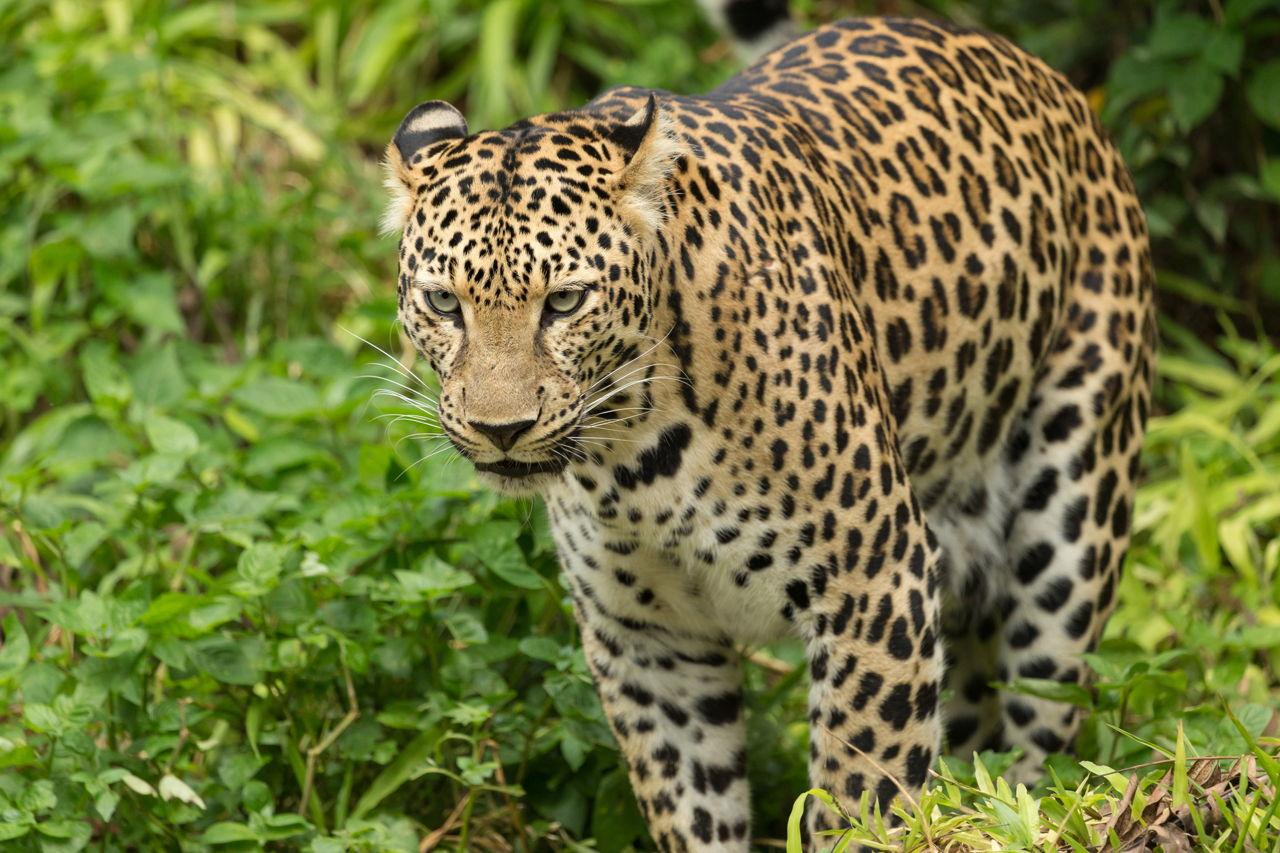Spectacular Rainforest Animal Adaptations You Simply Gotta ...