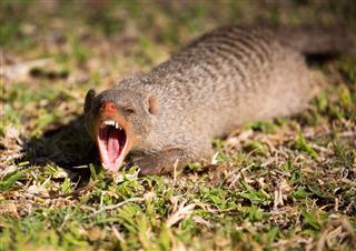 Yawning Or Warning
